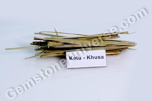 Poa cynosuroides Kusha Bhasma Sacred Ash for Ketu