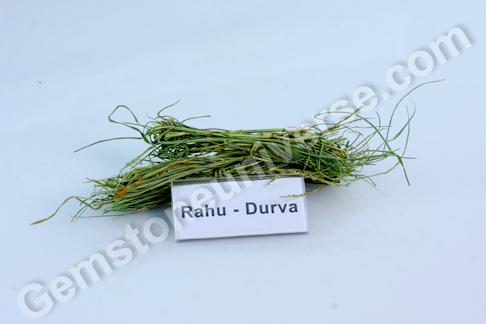 Cynodon dactylon Durva Bhasma Sacred Ash for Rahu