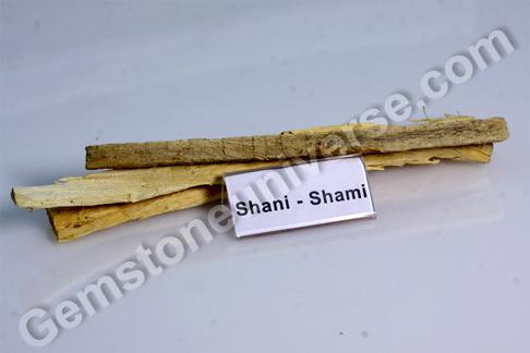 Prosopis cineraria Shami Bhasma Sacred Ash for Saturn